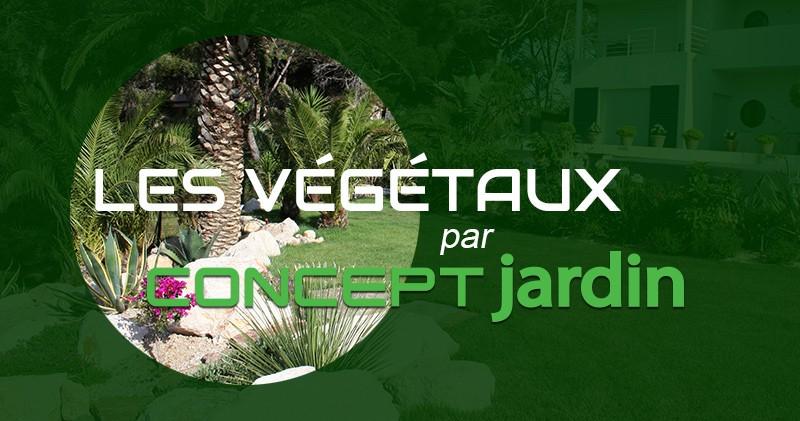 Les végétaux par Concept Jardin